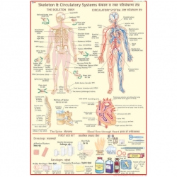 First Aid Charts