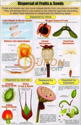 Dispersal of Fruits and Seeds Chart