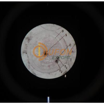 Microslide Meiosis