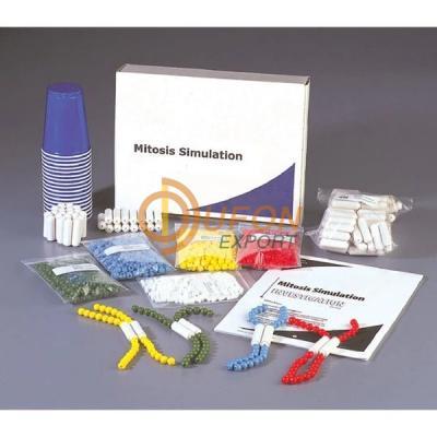 Mitosis Simulation Investigation