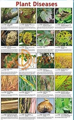 Plant Diseases Chart
