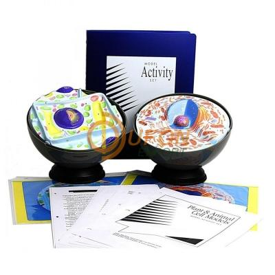 Plant and Animal Cell Model Activity Set