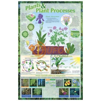 Plants and Plant Processes Poster