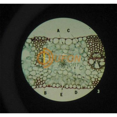 The Cell Structure Microslide