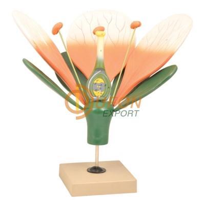 Typical Flower Model