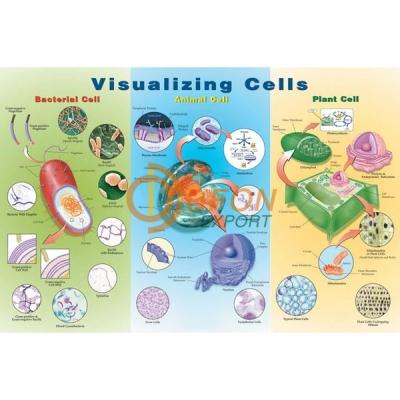 Visualizing Cells Poster